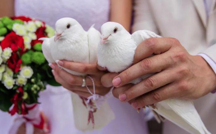 голуби в руках